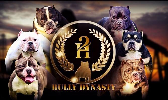 H2 Bully Dynasty